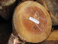 年輪が細かい天竜の木