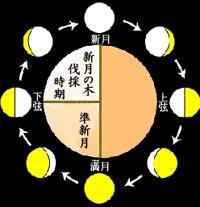 月の動きと新月伐採の時期