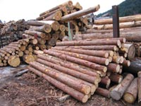 製材される前の貯木場の写真